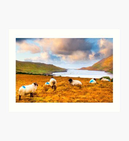 Sheep Crazing On The Irish Coast In Connemara Art Print