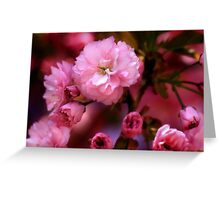 Lovely Spring Pink Cherry Blossoms Greeting Card