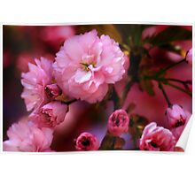 Lovely Spring Pink Cherry Blossoms Poster