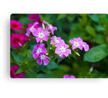 Sweet Pink Dianthus Flowers Canvas Print