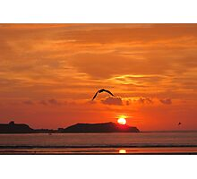 Seagull in sunset Photographic Print