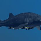 Whale Shark by Walter Colvin