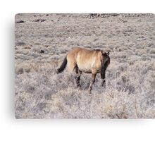 wild horse in a desolate desert Canvas Print