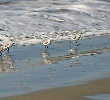 Sanderlings by fsmitchellphoto