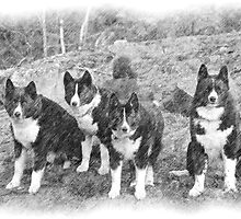 RunningBearDog Karelians - Dogs of Nature in Black and White by Gail Rasanen