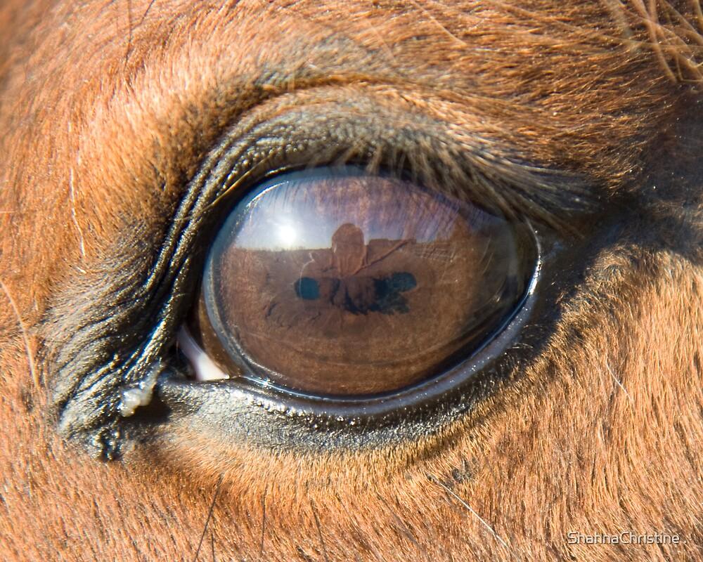 Eye by ShahnaChristine .
