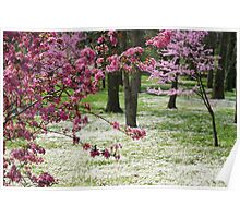 SPRING in the Backyard Poster