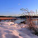 Taku..a winter's dawn by VickiOBrien