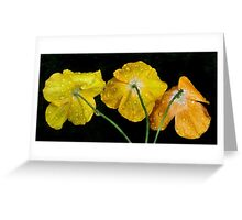 The papaver can-can Greeting Card
