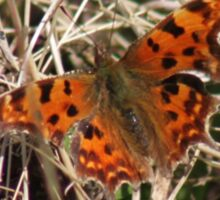 This is the first Comma this year.  Sticker