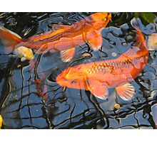Dreamy Koi Photographic Print