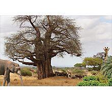 1168-Under the Tree Photographic Print