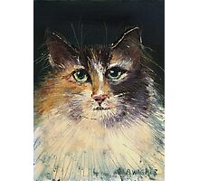 Long Haired Cat Photographic Print