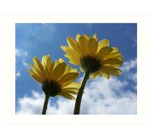 Sunbathing Gerberas Art Print