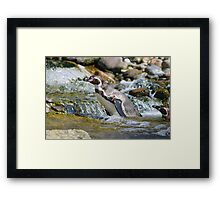 Penguin in the Water Framed Print