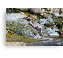 Penguin in the Water Canvas Print