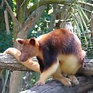 Tree Kangaroo by SeanDalby
