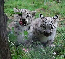 Gobi and Tashi by DanielTMiller
