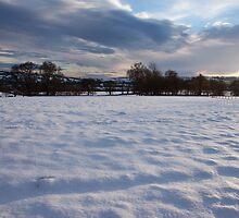 Snow by Stuart Jenkins