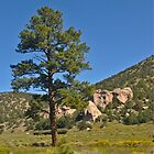New Mexico Blue Meets Green by Thomas Barker-Detwiler