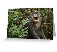 Chimpanzee Greeting Card