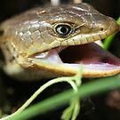 Alligator Lizard  by SKNickel