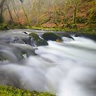 Dartmoor: The River Walkham at Grenofen by Rob Parsons