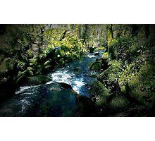 Kennall vale Woods - Cornwall Photographic Print