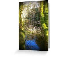 Kennall vale Woods - Cornwall Greeting Card