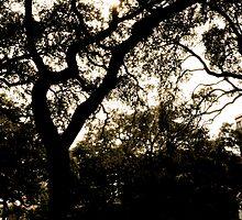 Savannah by TaraRoxy9