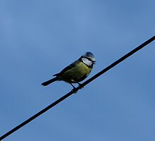 Bird on a wire by Sharon Perrett
