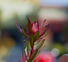 Flower. by Filipinoise