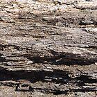 Retired Tree by Kenneth Hoffman