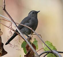 Grey catbird in autumn by hummingbirds