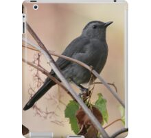 Grey catbird in autumn iPad Case/Skin