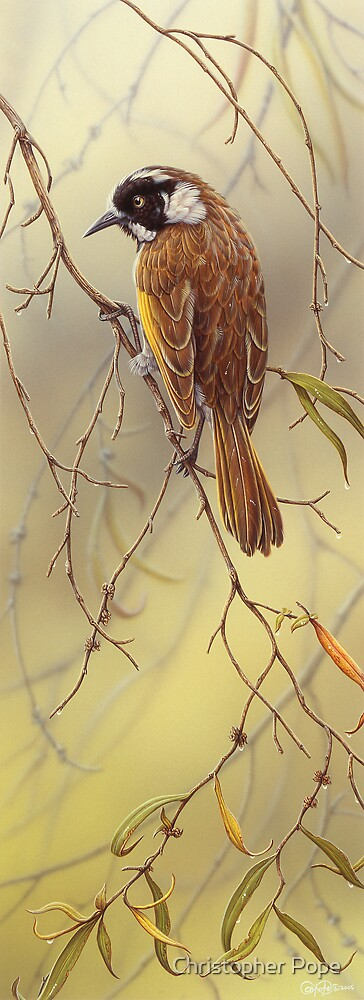 Australian New Holland Honeyeater by Christopher Pope