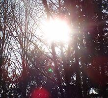 Early Morning Sun Rays #19 by Dawna Morton