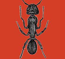 Ant by tiozombi