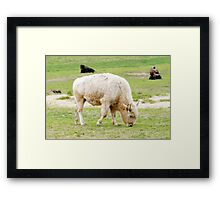 White Buffalo Framed Print