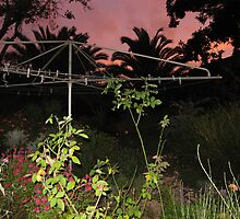 Early evening light out the back yard with clothes line. by Marilyn Baldey