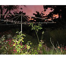 Early evening light out the back yard with clothes line. Photographic Print