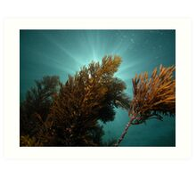 Seaweed and sunrays Art Print