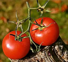 Tomato The Red Tomato  by Tenee Attoh