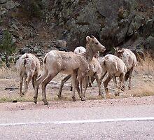 colorado deer? by seemyshots