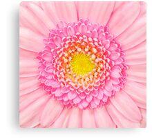 Pink Gerbera Flower Macro Canvas Print