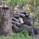 Logs by MichelleR