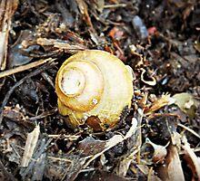 Lake Osakis Shell by mezzilicious