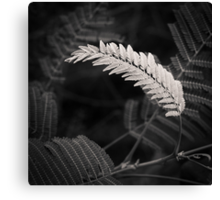 lonely fern Canvas Print