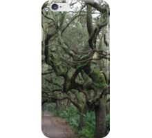 Walk in the Woods iPhone Case/Skin