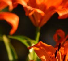 Fiery Lily Flowers Sticker